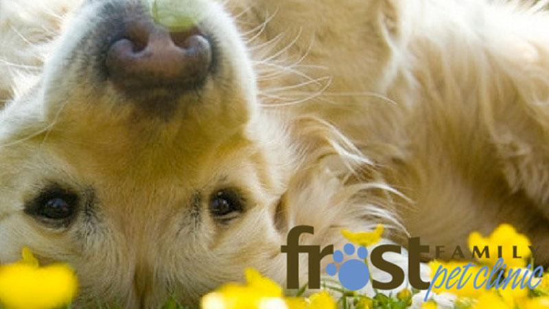 Frost Family Pet Clinic