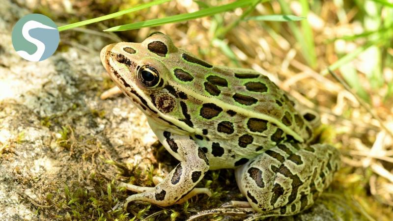 Frog Adventure at Forest Preserves of Winnebago County Headquarters
